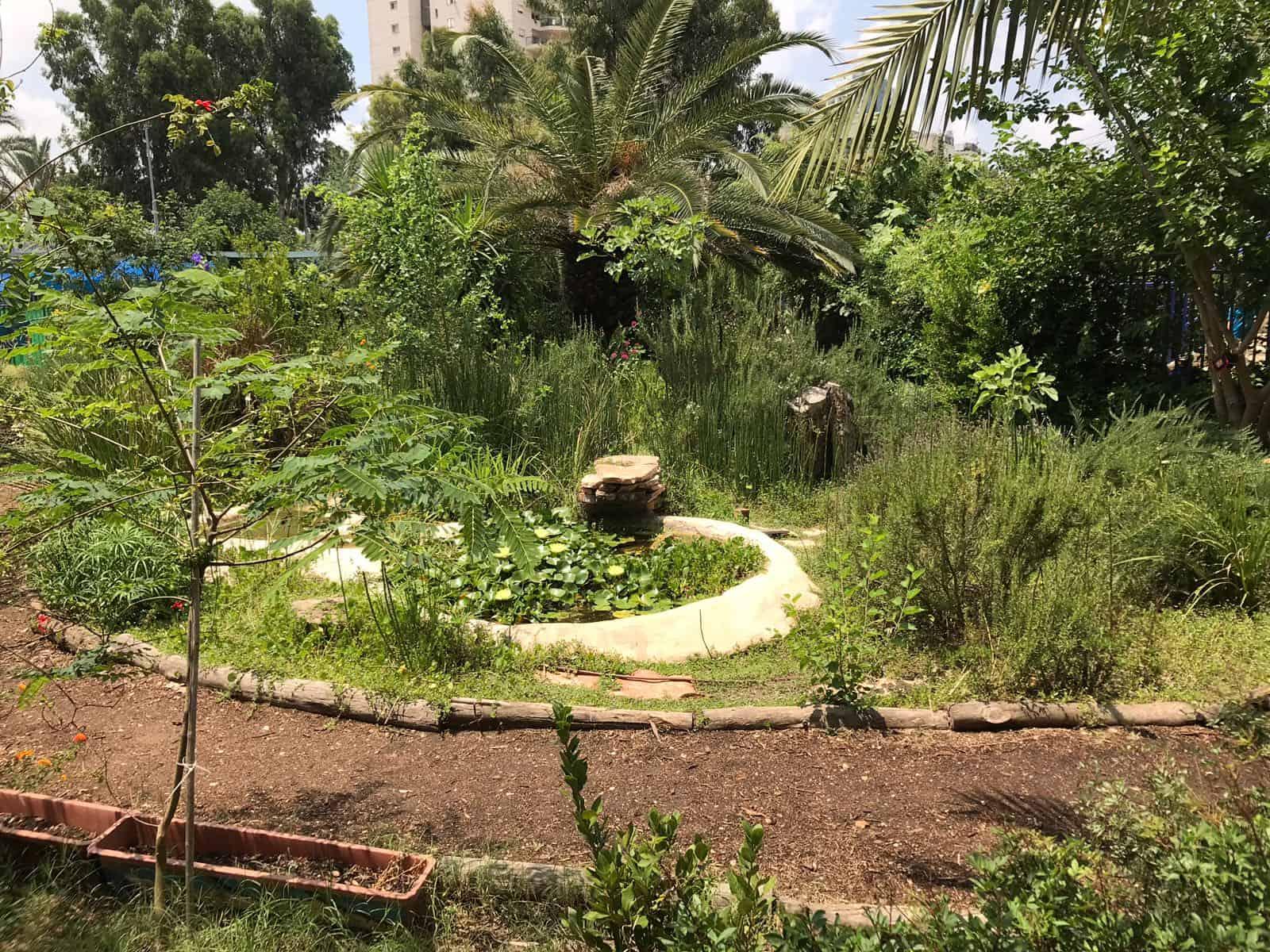 הגינה האקולוגית בבית ספר נטעים, צילום: מלי אלמלם